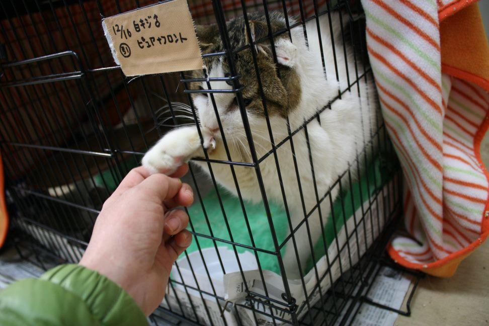 【移動先募集】センター(本所)収容猫(12/24訪問)_f0242002_14474437.jpg