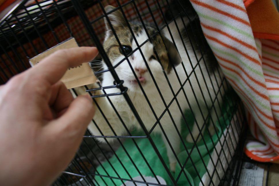 【移動先募集】センター(本所)収容猫(12/24訪問)_f0242002_14475341.jpg