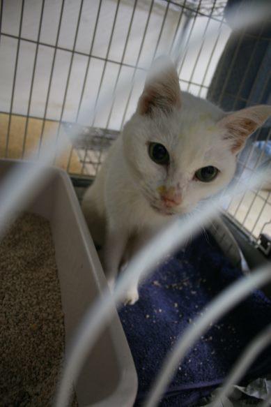 【移動先募集】センター(本所)収容猫(12/24訪問)_f0242002_14503764.jpg