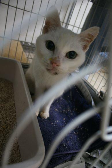 【移動先募集】センター(本所)収容猫(12/24訪問)_f0242002_14504484.jpg