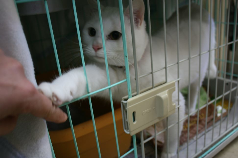 【移動先募集】センター(本所)収容猫(12/24訪問)_f0242002_14530702.jpg