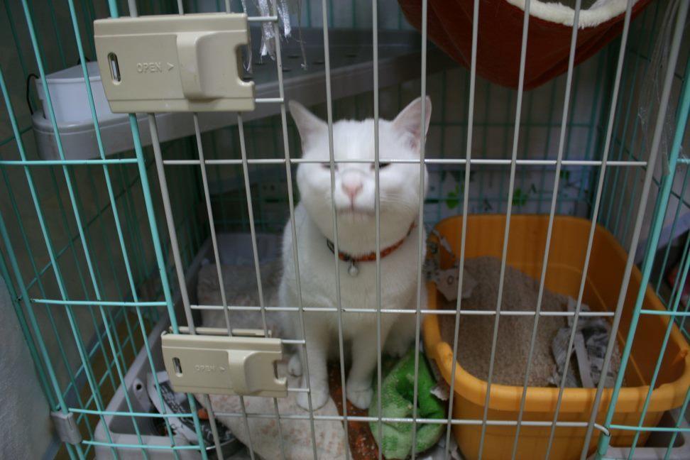 【移動先募集】センター(本所)収容猫(12/24訪問)_f0242002_14533648.jpg