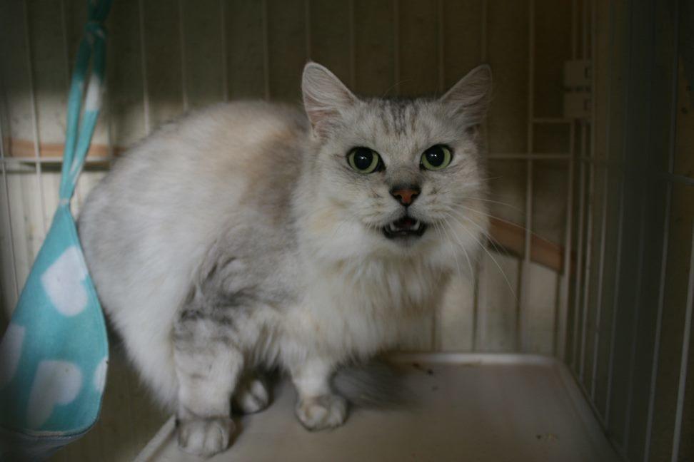 【移動先募集】センター(本所)収容猫(12/24訪問)_f0242002_14564254.jpg