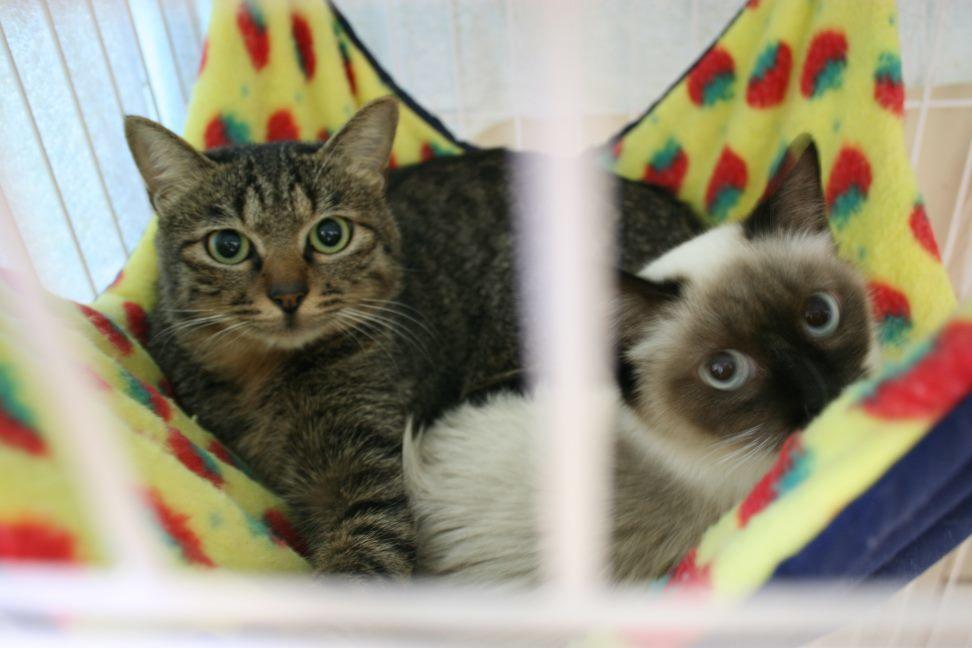 【移動先募集】センター(本所)収容猫(12/24訪問)_f0242002_14591297.jpg