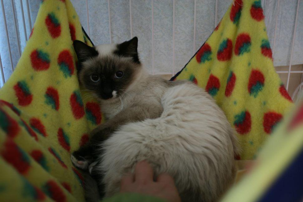 【移動先募集】センター(本所)収容猫(12/24訪問)_f0242002_14591808.jpg
