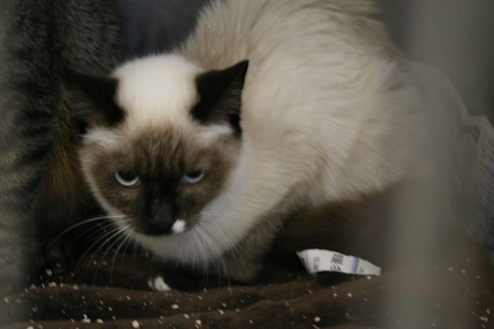 【移動先募集】センター(本所)収容猫(12/24訪問)_f0242002_14595169.jpg