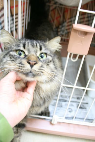 【移動先募集】センター(本所)収容猫(12/24訪問)_f0242002_15071511.jpg