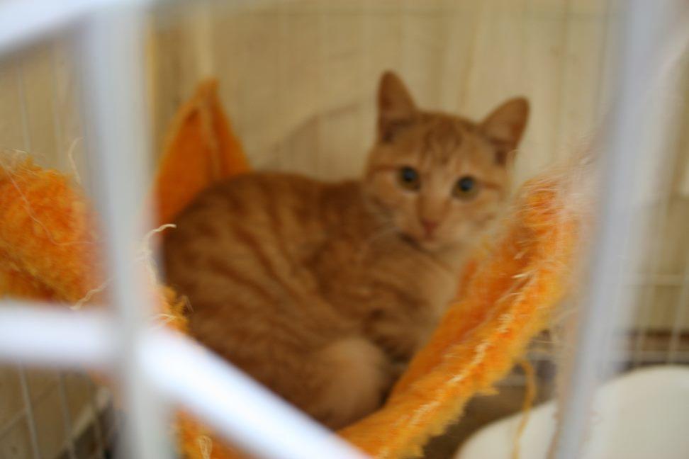 【移動先募集】センター(本所)収容猫(12/24訪問)_f0242002_15145718.jpg