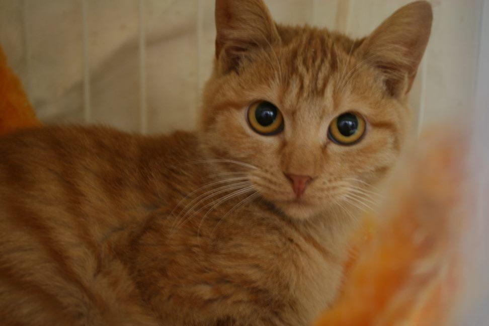 【移動先募集】センター(本所)収容猫(12/24訪問)_f0242002_15150201.jpg