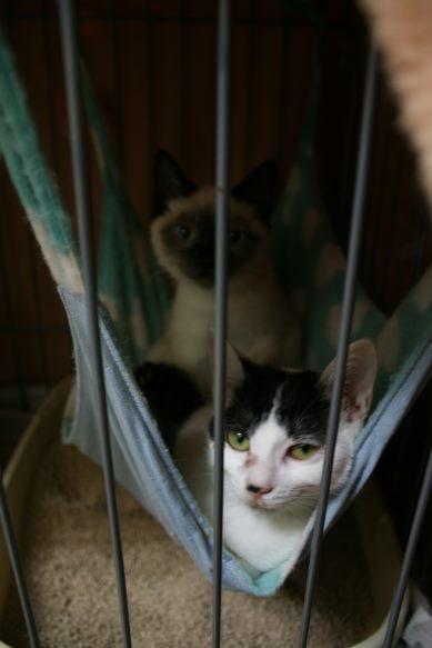【移動先募集】センター(本所)収容猫(12/24訪問)_f0242002_15161224.jpg
