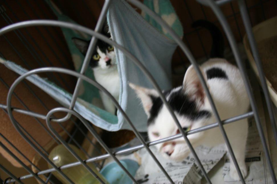 【移動先募集】センター(本所)収容猫(12/24訪問)_f0242002_15161747.jpg