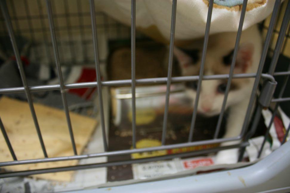 【移動先募集】センター(本所)収容猫(12/24訪問)_f0242002_15165915.jpg