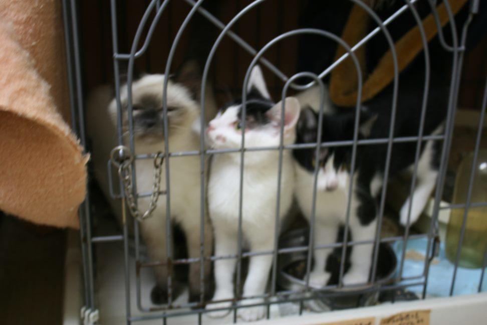 【移動先募集】センター(本所)収容猫(12/24訪問)_f0242002_15201120.jpg