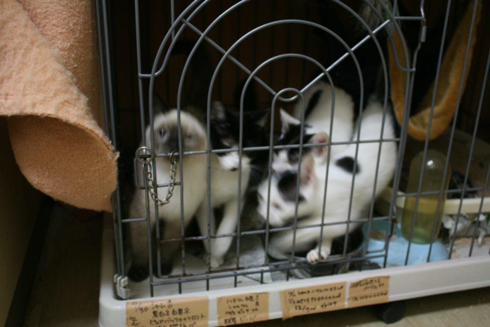 【移動先募集】センター(本所)収容猫(12/24訪問)_f0242002_15202852.jpg