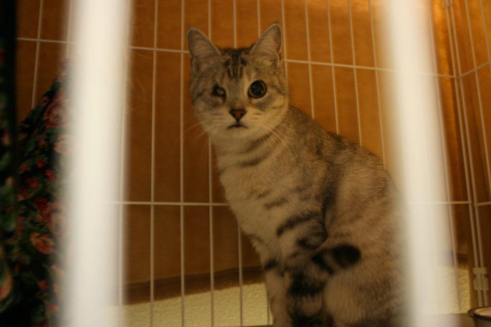 【移動先募集】センター(本所)収容猫(12/24訪問)_f0242002_15273580.jpg