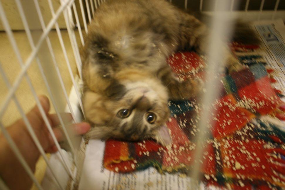 【移動先募集】センター(本所)収容猫(12/24訪問)_f0242002_15282315.jpg