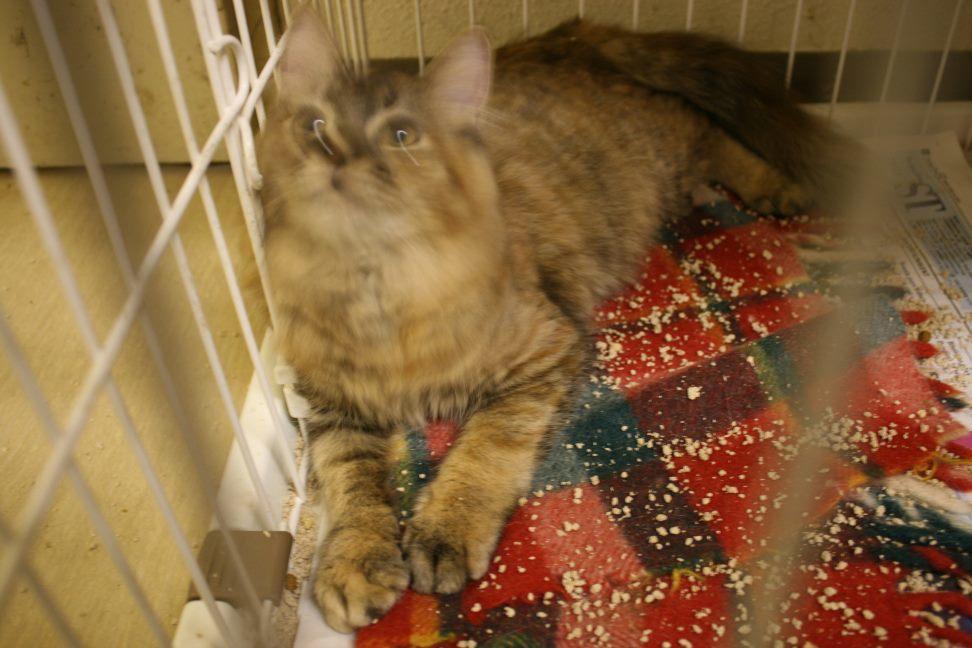 【移動先募集】センター(本所)収容猫(12/24訪問)_f0242002_15334738.jpg