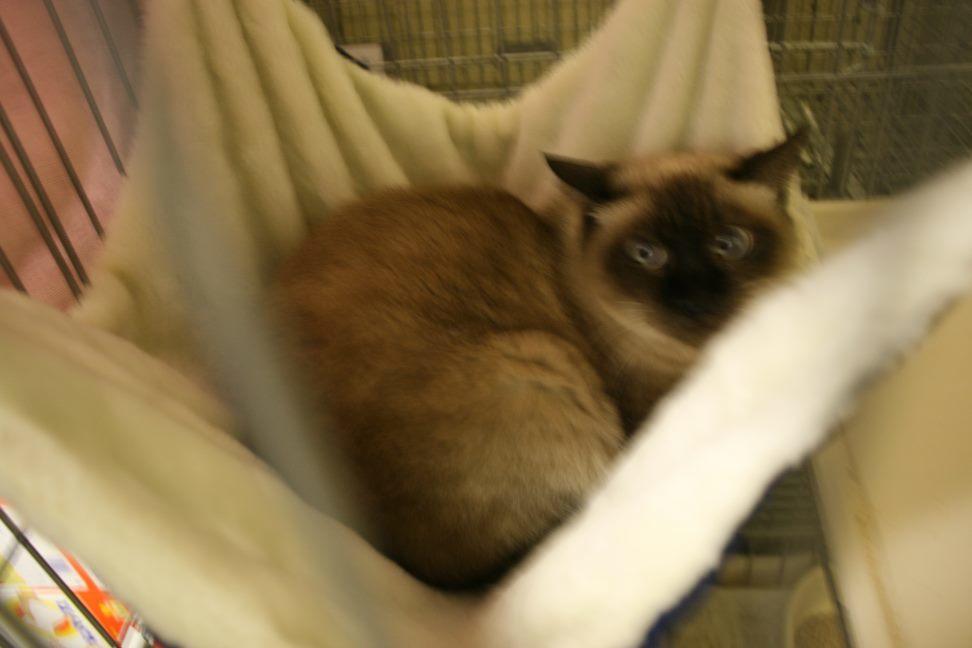 【移動先募集】センター(本所)収容猫(12/24訪問)_f0242002_15342943.jpg