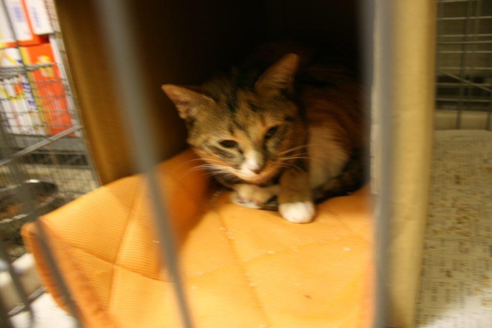 【移動先募集】センター(本所)収容猫(12/24訪問)_f0242002_15343562.jpg