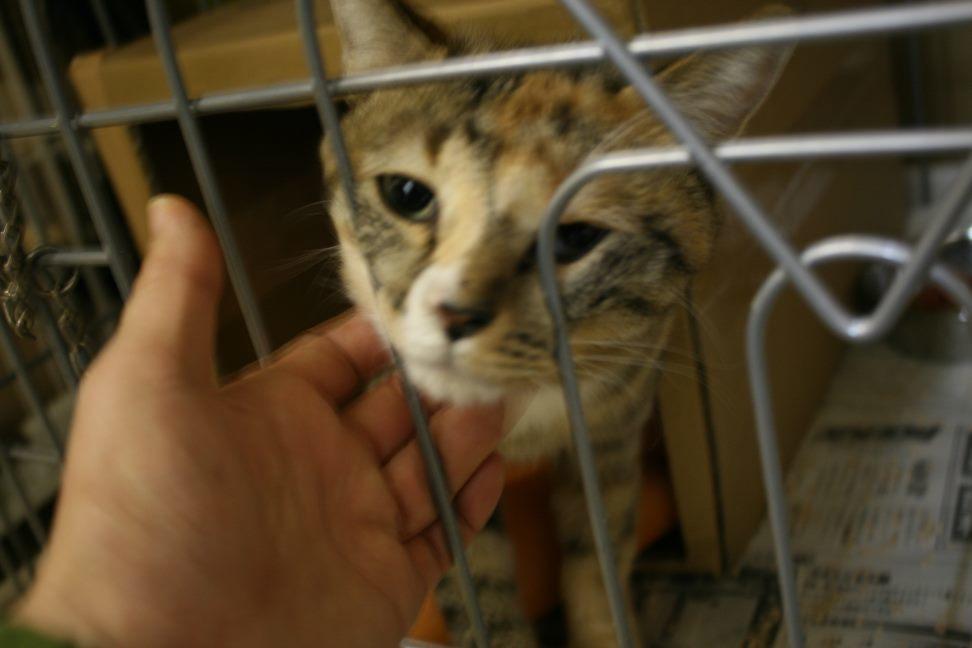 【移動先募集】センター(本所)収容猫(12/24訪問)_f0242002_15345537.jpg