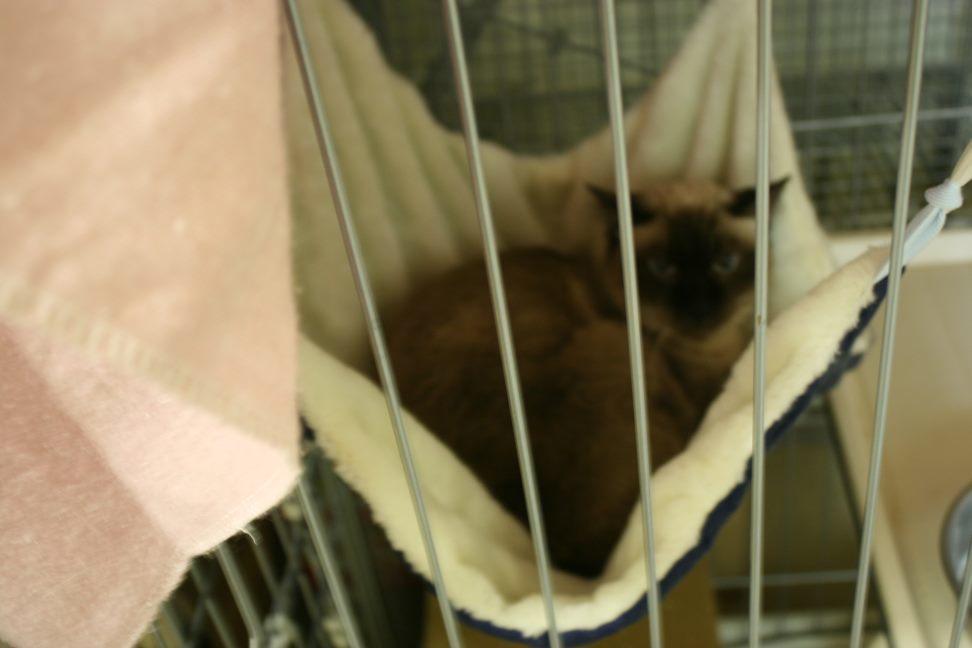 【移動先募集】センター(本所)収容猫(12/24訪問)_f0242002_15351669.jpg