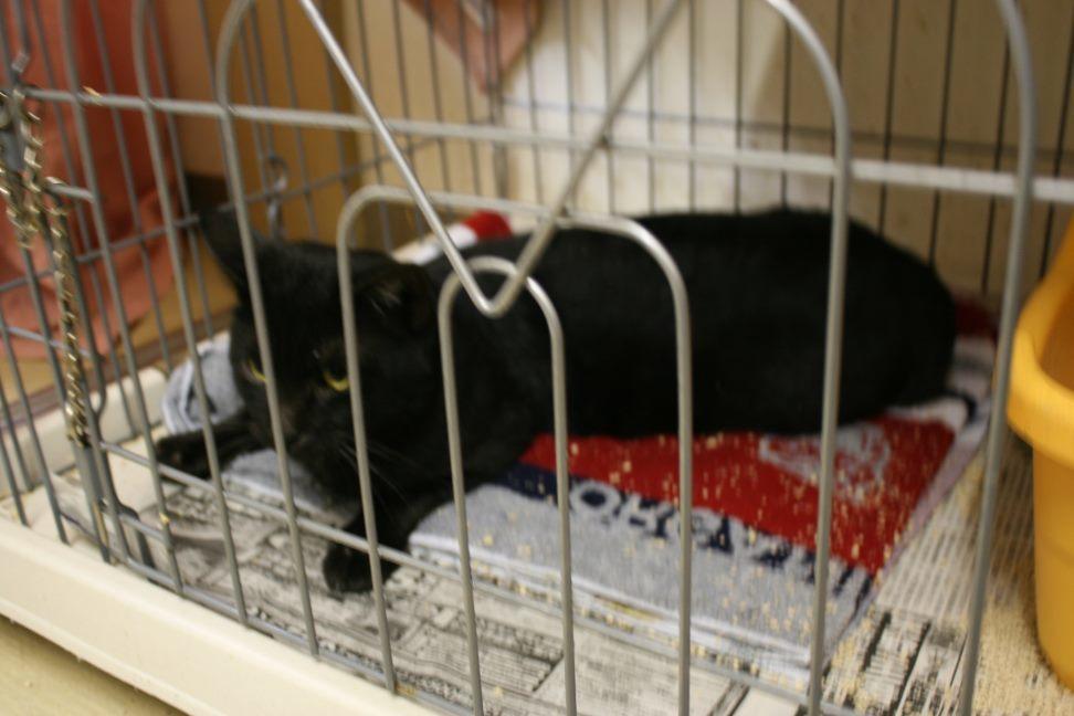 【移動先募集】センター(本所)収容猫(12/24訪問)_f0242002_15420502.jpg