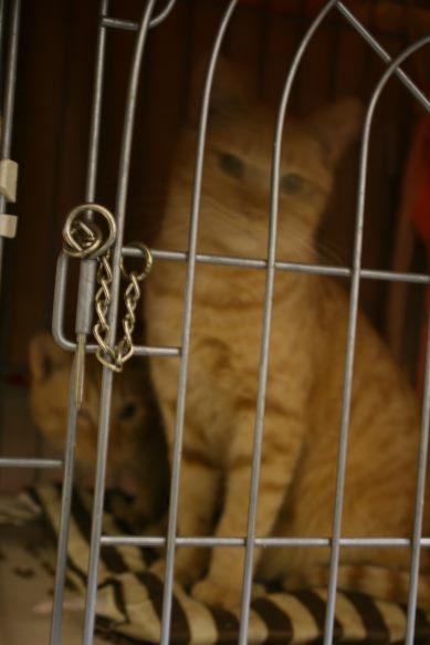 【移動先募集】センター(本所)収容猫(12/24訪問)_f0242002_15421973.jpg