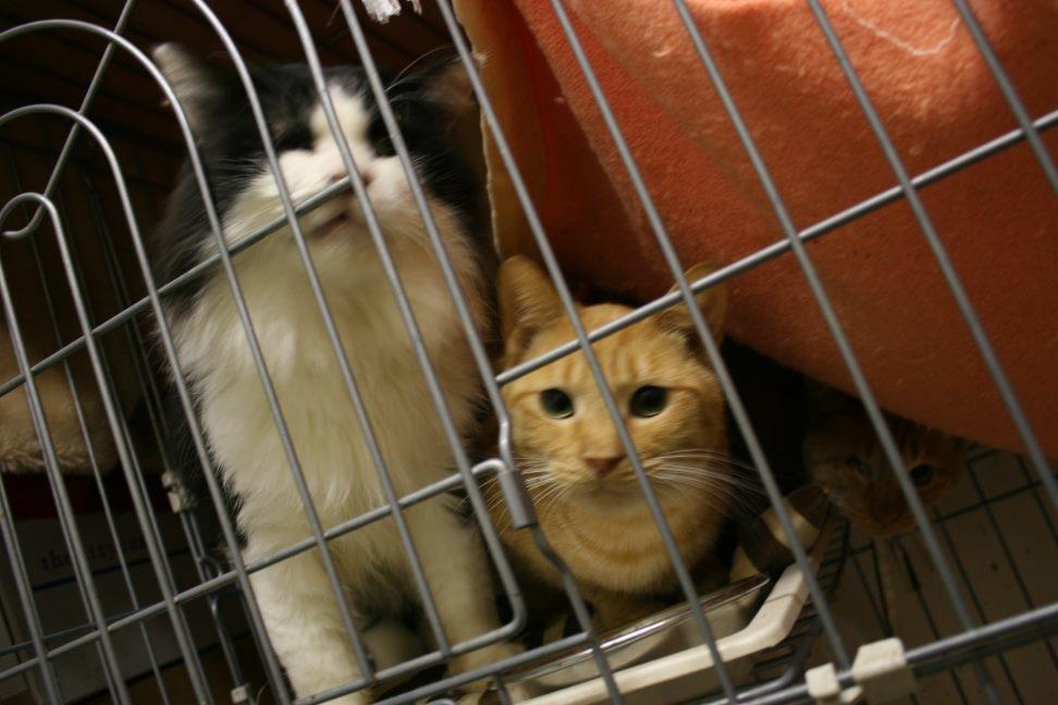 【移動先募集】センター(本所)収容猫(12/24訪問)_f0242002_15430747.jpg