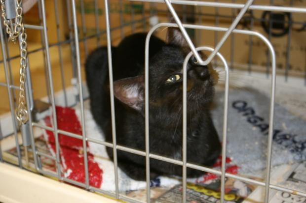 【移動先募集】センター(本所)収容猫(12/24訪問)_f0242002_15432751.jpg