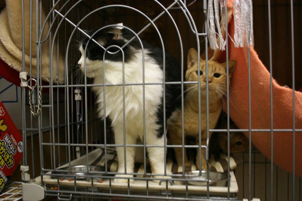 【移動先募集】センター(本所)収容猫(12/24訪問)_f0242002_15434123.jpg