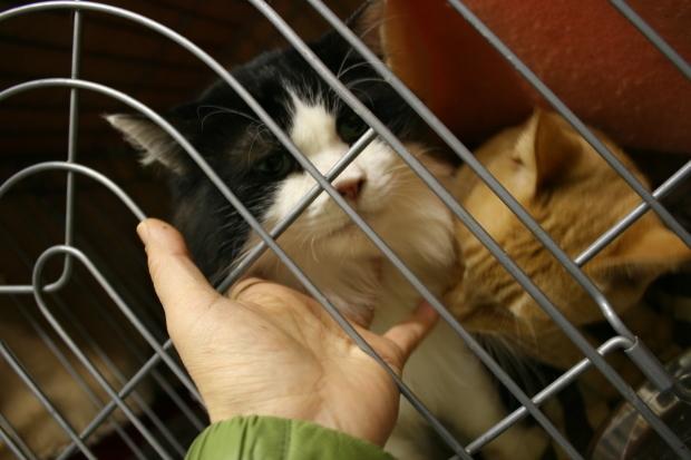【移動先募集】センター(本所)収容猫(12/24訪問)_f0242002_15435015.jpg