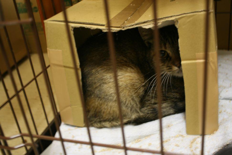 【移動先募集】センター(本所)収容猫(12/24訪問)_f0242002_16091798.jpg