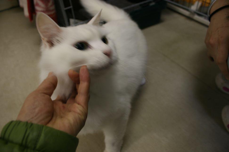 【移動先募集】センター(本所)収容猫(12/24訪問)_f0242002_16112004.jpg