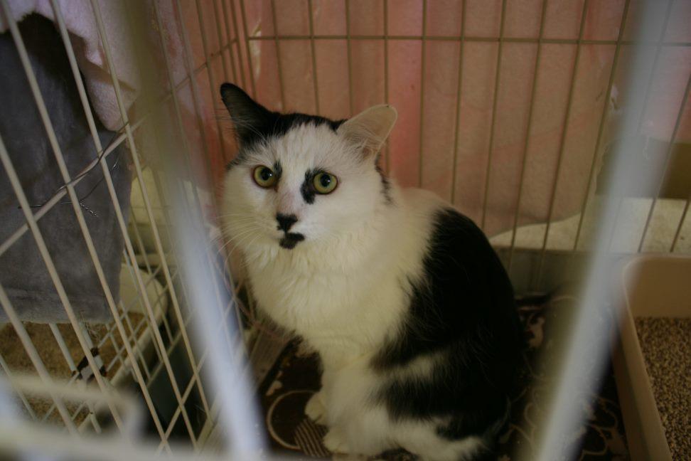 【移動先募集】センター(本所)収容猫(12/24訪問)_f0242002_16132192.jpg