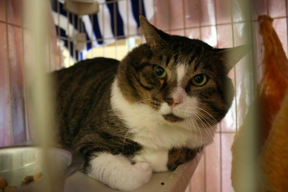 【移動先募集】センター(本所)収容猫(12/24訪問)_f0242002_16132757.jpg