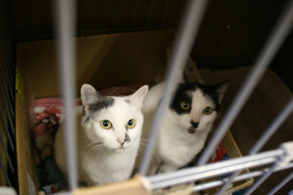 【移動先募集】センター(本所)収容猫(12/24訪問)_f0242002_16181297.jpg