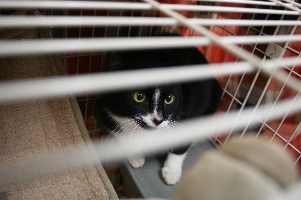 【移動先募集】センター(本所)収容猫(12/24訪問)_f0242002_16313546.jpg