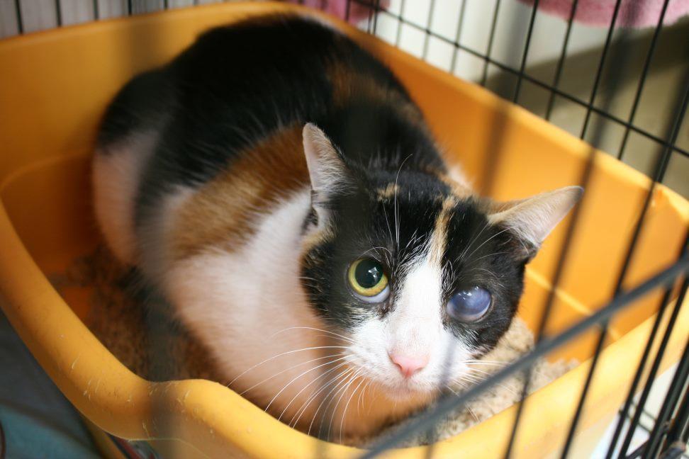 【移動先募集】センター(本所)収容猫(12/24訪問)_f0242002_16330438.jpg