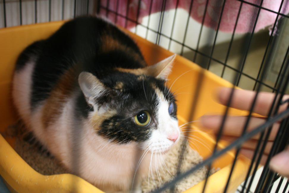 【移動先募集】センター(本所)収容猫(12/24訪問)_f0242002_16333523.jpg