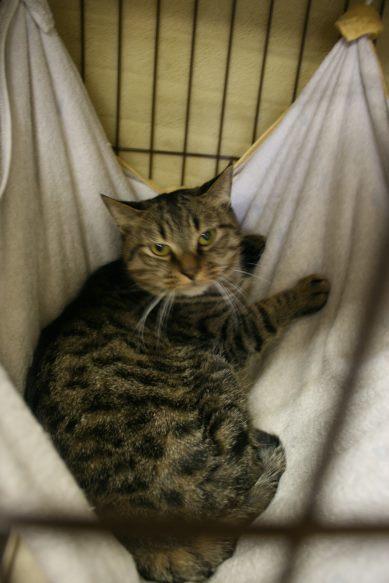 【移動先募集】センター(本所)収容猫(12/24訪問)_f0242002_16394811.jpg