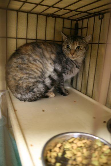 【移動先募集】センター(本所)収容猫(12/24訪問)_f0242002_16430489.jpg