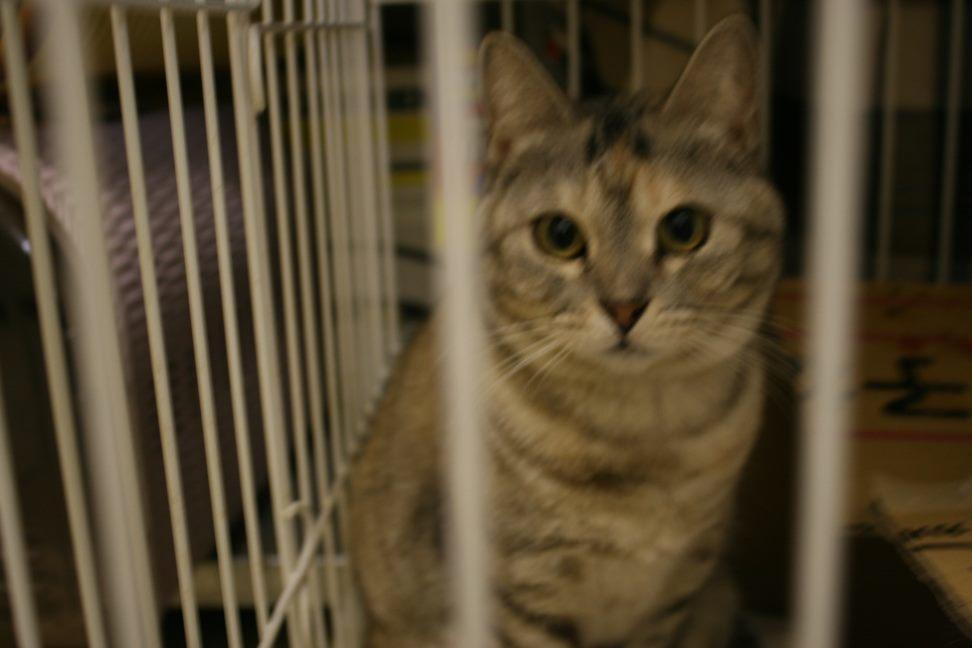 【移動先募集】センター(本所)収容猫(12/24訪問)_f0242002_16502686.jpg