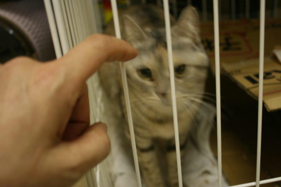 【移動先募集】センター(本所)収容猫(12/24訪問)_f0242002_16505849.jpg
