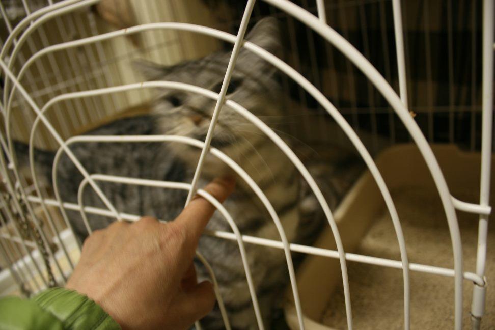 【移動先募集】センター(本所)収容猫(12/24訪問)_f0242002_16515980.jpg