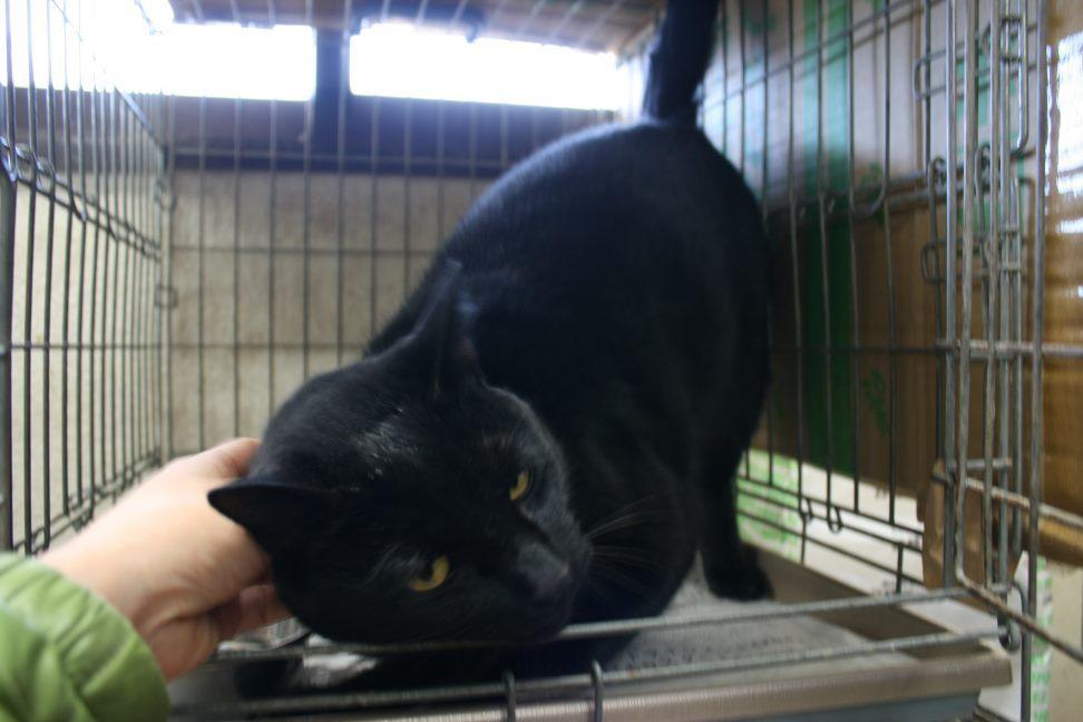 【移動先募集】センター(本所)収容猫(12/24訪問)_f0242002_17070384.jpg