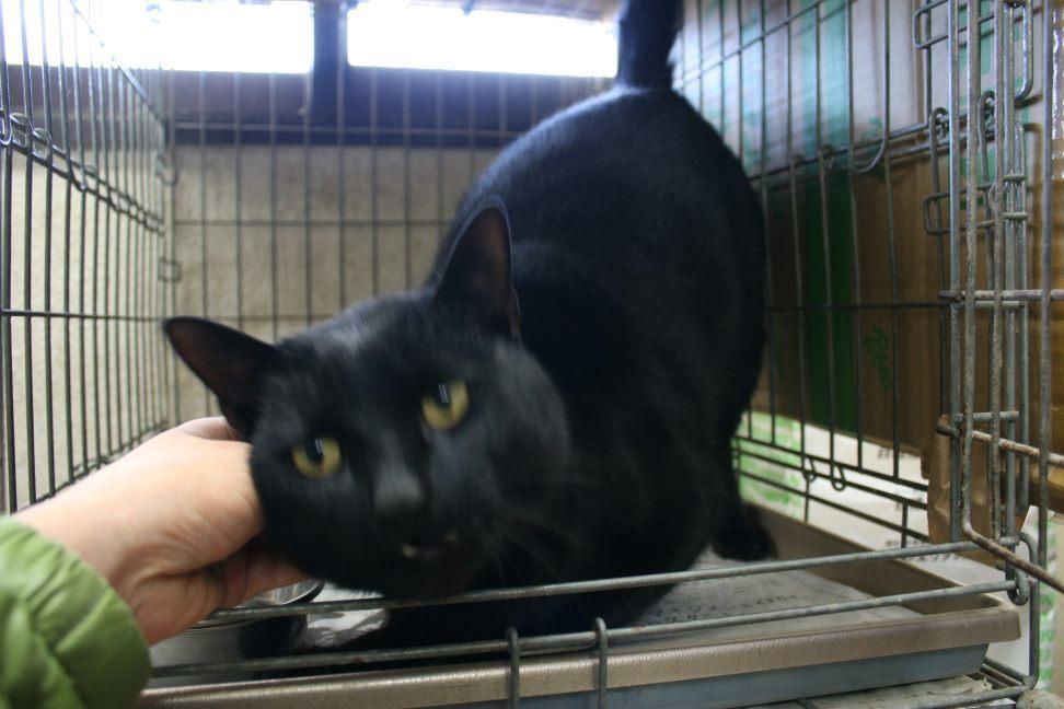 【移動先募集】センター(本所)収容猫(12/24訪問)_f0242002_17073295.jpg