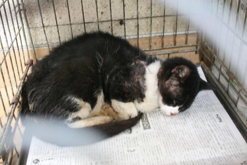 【移動先募集】センター(本所)収容猫(12/24訪問)_f0242002_17083223.jpg