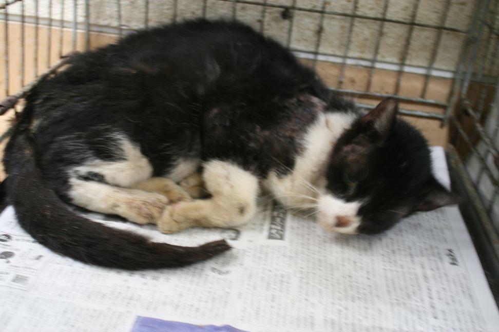 【移動先募集】センター(本所)収容猫(12/24訪問)_f0242002_17090273.jpg