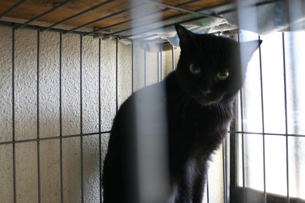 【移動先募集】センター(本所)収容猫(12/24訪問)_f0242002_17100173.jpg