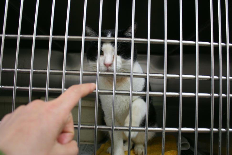【移動先募集】センター(本所)収容猫(12/24訪問)_f0242002_17113252.jpg
